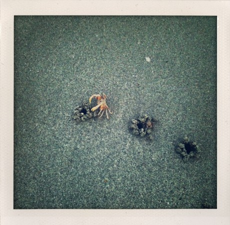At first, no idea what they were. Then the Crabs came out.